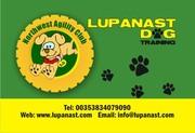 Lupanast Dog Training /North West Agility Centre