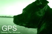 Galway Pet Services - Dog Walking