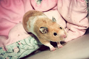Critter Care Pet Sitting
