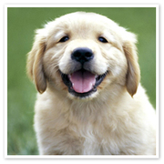 Paws 4 Thought - Dog Grooming,  Dog Walking and House Boarding Services