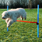 Dog Training Agility Equipment